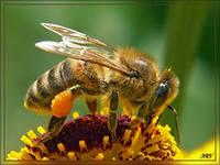 Свойства цветочной пыльцы.
