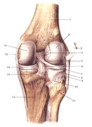 Как вылечить суставы?