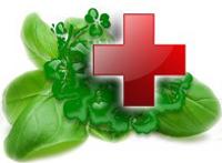 Травы или лекарства?
