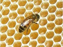 Три факта о вреде меда, о которых вы никогда не слышали.