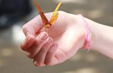 Здоровье по ногтям. Как ногти расскажут о вашем здоровье.